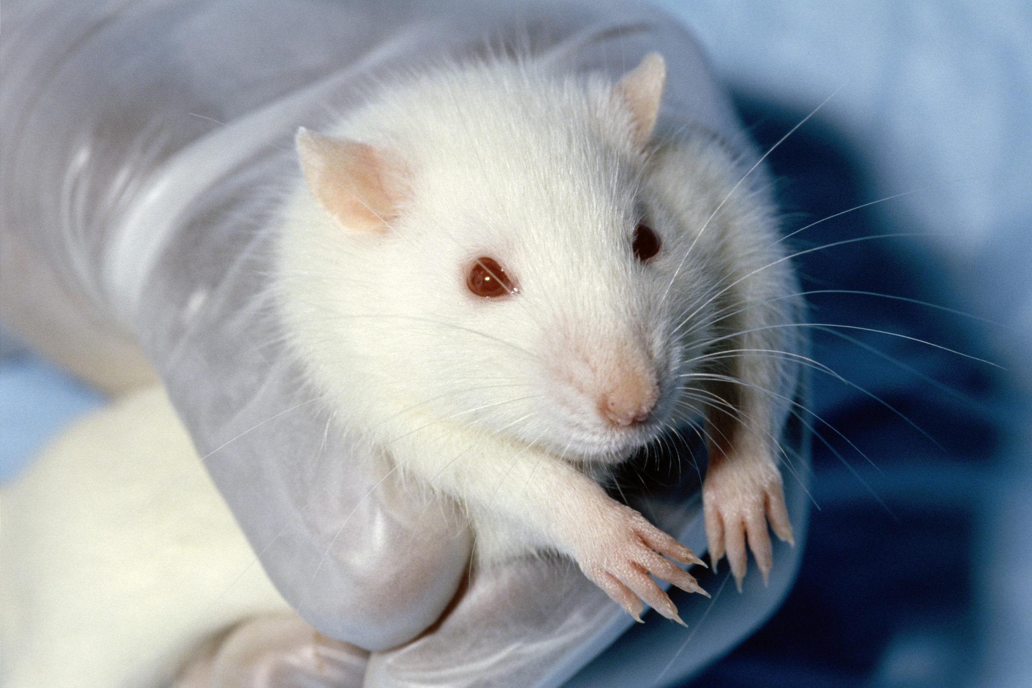 Why Animal Testing is Abuse – Vox Populi